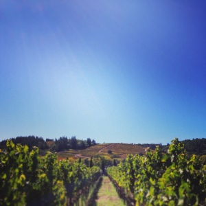 October 1, 2014 - Dry Creek Valley